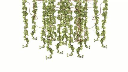 vine tendrils in light wind