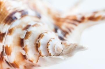 Macro image of sea shell