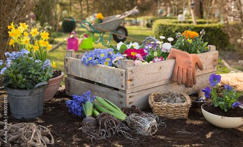 Fotobehang Bloemen Frühlingsblumen: Blumen einpflanzen im Frühjahr