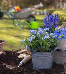 Pflanzzeit im Frühjahr: Vergissmeinnicht und Hyazinthen Blumen