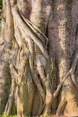 фрагмент ствола дерева