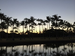 Silhouette of the palm trees