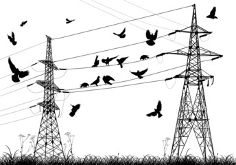 electrical pylons and birds isolated on white