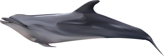 recumbent dolphin illustration on white