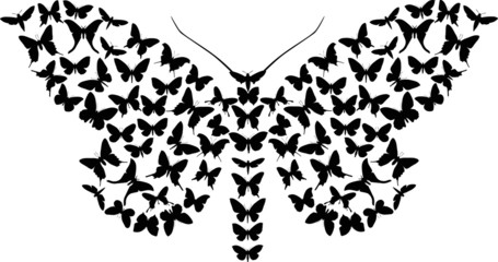 complex butterfly silhouette isolated on white