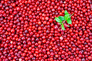 Lingonberry with sprig texture