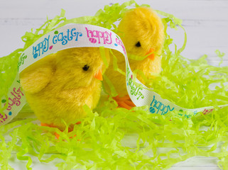 Easter chicks with ribbon on white wood background