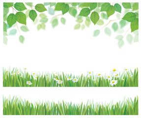 Vector spring birch tree leaves, grass and daisy flowers  border