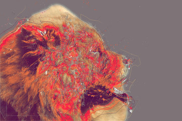 Chow Chow dog portrait. Abstract artwork