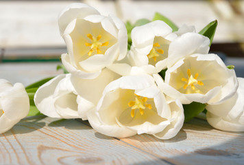 White tulips on a old wooden background blue grey