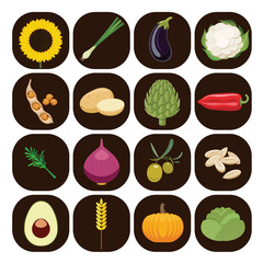 Set of different kinds of vegetables.