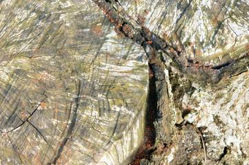 pattern, mushroom on bark, white fungus