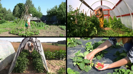 Women gardener care plants and harvest in garden. Clips collage