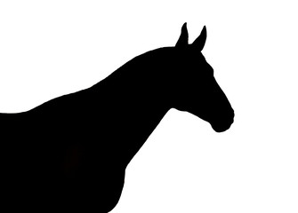 Black horse silhouette on a white background
