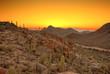 Leinwandbild Motiv sonoran desert before dawn