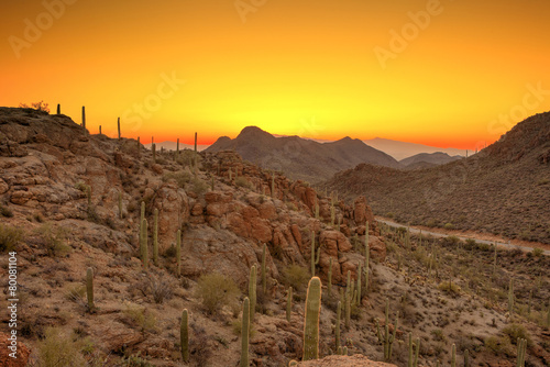 sonoran desert before dawn