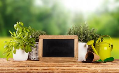 Fresh herbs in flowerpots on wooden table