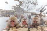 みんなで温泉 おさるさん。snow monkey of the outdoor bath
