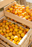 apricots, market in Nyons, Rhone-Alpes, France - 80083173