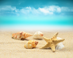 Summer beach. Starfish and seashell on the sand.