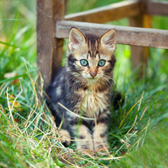 Cute kitten staying in a tall grass in the garden