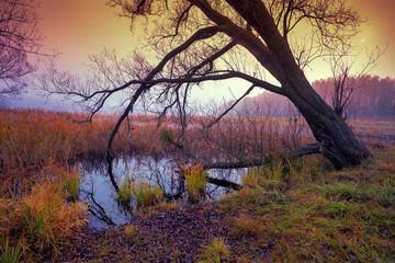 Foggy autumn landscape at sunrise