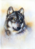 Wolf, wild animal painting , color background on paper
