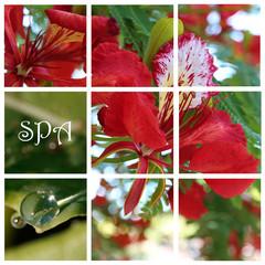 Collage aus Blüte mit Tropfen für SPA