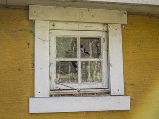 Abandoned yellow house with broken window