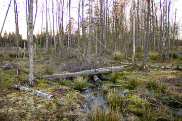 Marsh next to clearcut area