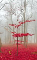 Zauber Wald in rot und weiß © wsf-f