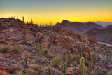 sunrise in the sonoran desert