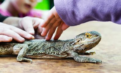 People and big lizard