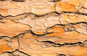 The pine bark