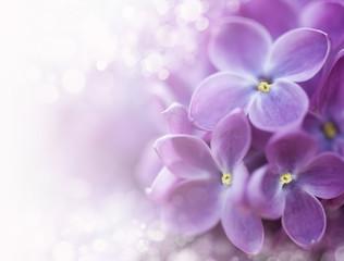 Lilac bokeh