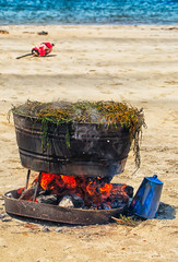 Lobsters cooking wood fire beach in Maine. Summer tradition.