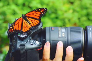 Butterfly on my camera
