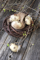 Easter eggs on wooden plank