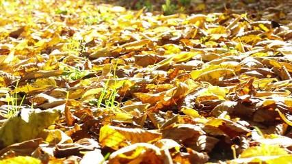 Land autumn