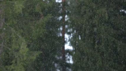 Snowflakes in pinewood