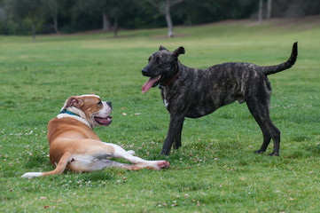 Dogs taking a quick break from playtime