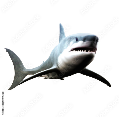 Fototapeta Great white shark swimming on a white background