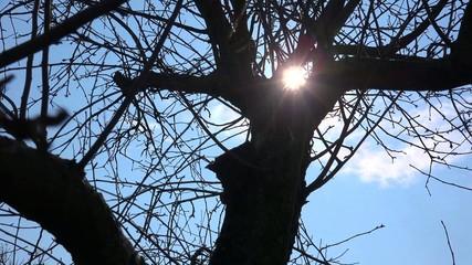 Sun Light Through Tree Branch. 4k Ultra HD