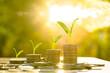 Leinwanddruck Bild - Money growing concept,Business success concept