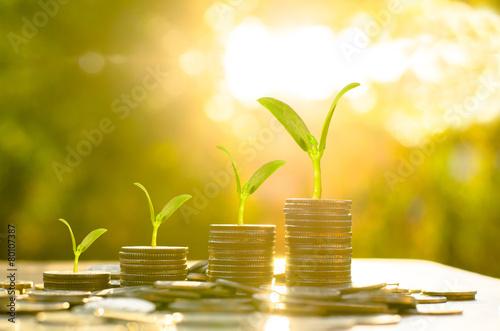 Leinwanddruck Bild Money growing concept,Business success concept