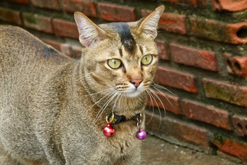 Cat with two small bells