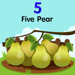 Illustrator of number five pear