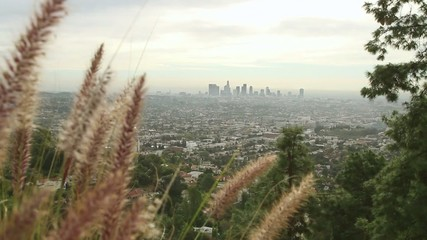 View of Los Angeles with downtown skyscrapers visible through the haze, grasses and trees in the foreground.