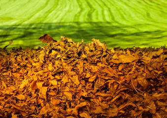 pile of autumn leaves