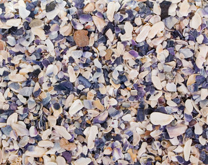 Shell sand background